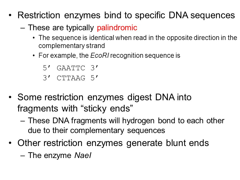 Restriction enzymes bind to specific DNA sequences