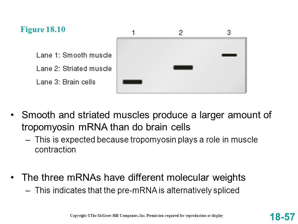 The three mRNAs have different molecular weights
