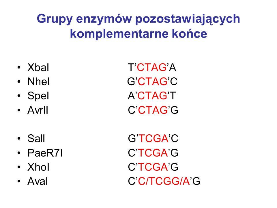 Grupy enzymów pozostawiających komplementarne końce