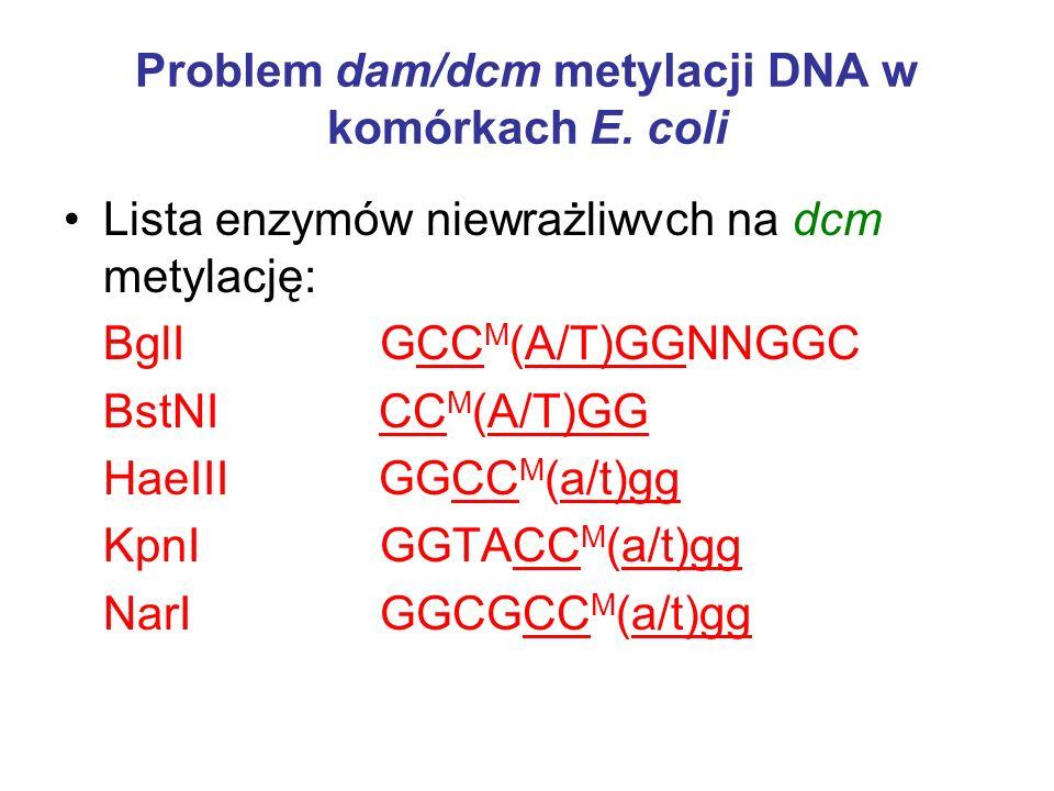 Problem dam/dcm metylacji DNA w komórkach E. coli