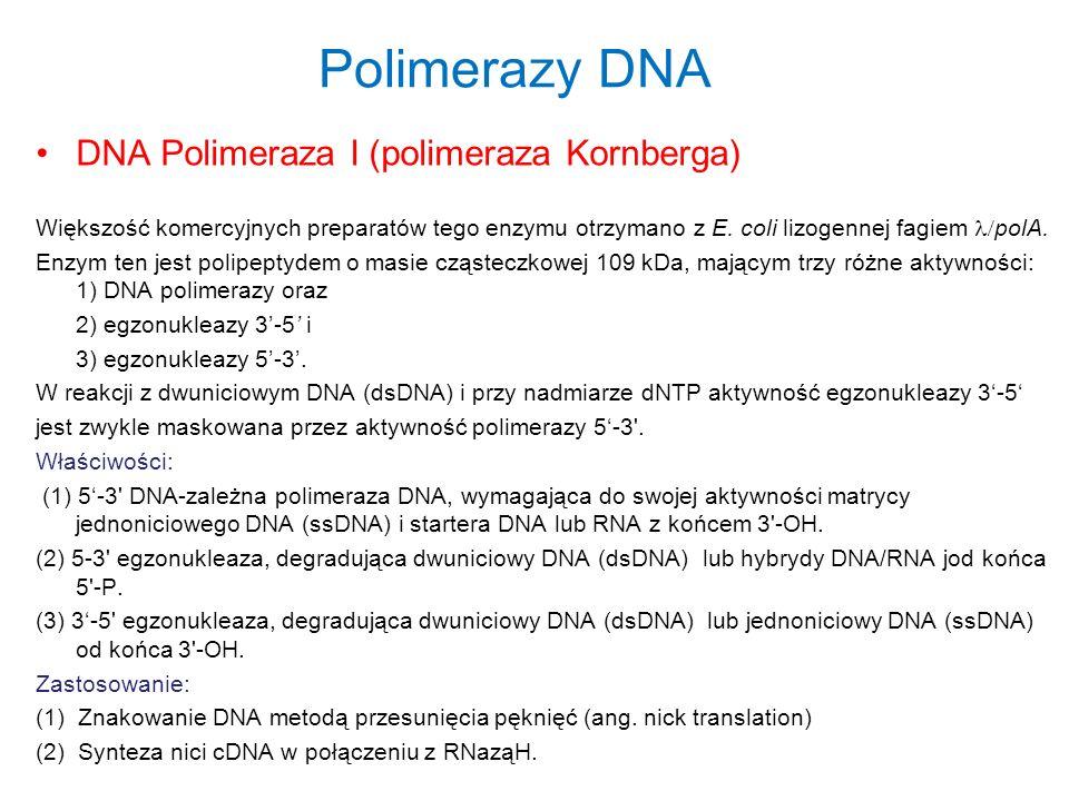 Polimerazy DNA DNA Polimeraza I (polimeraza Kornberga)