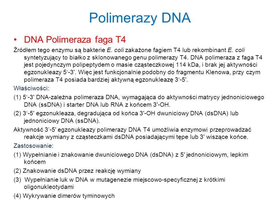 Polimerazy DNA DNA Polimeraza faga T4