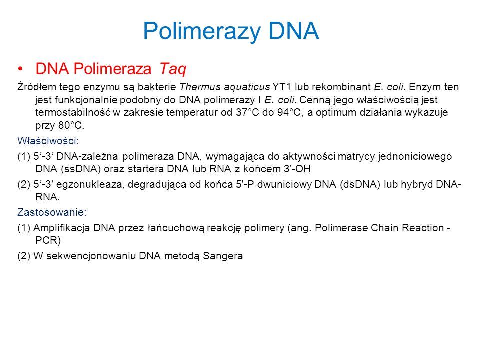 Polimerazy DNA DNA Polimeraza Taq