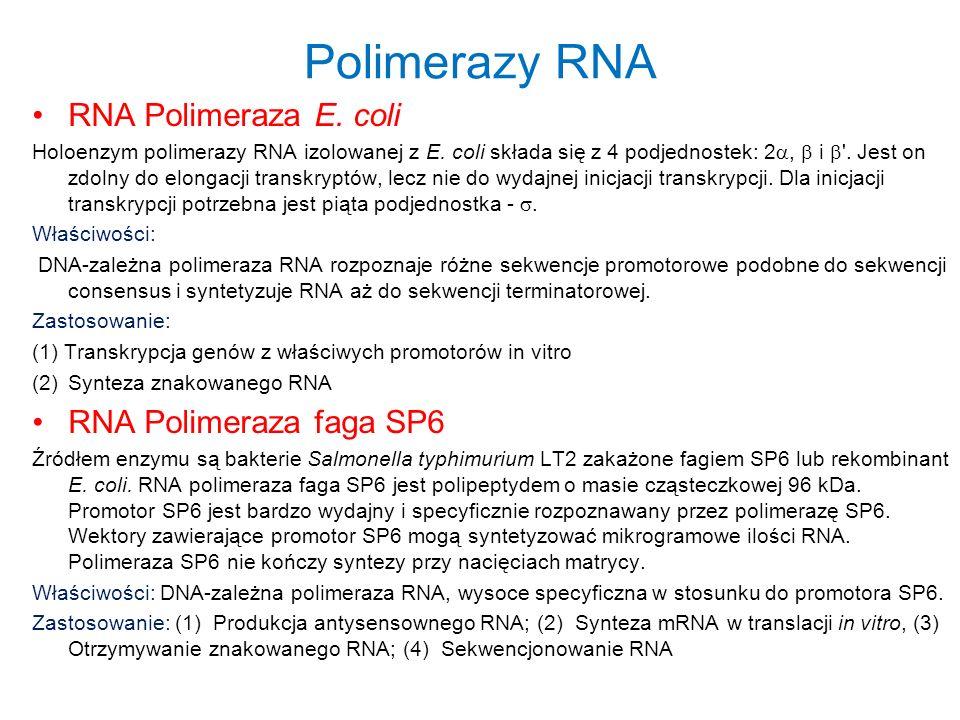 Polimerazy RNA RNA Polimeraza E. coli RNA Polimeraza faga SP6