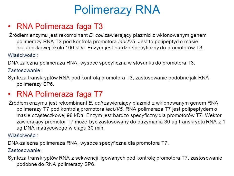 Polimerazy RNA RNA Polimeraza faga T3 RNA Polimeraza faga T7