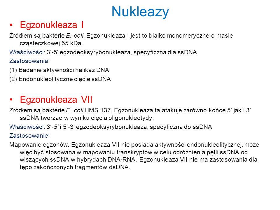 Nukleazy Egzonukleaza I Egzonukleaza VII