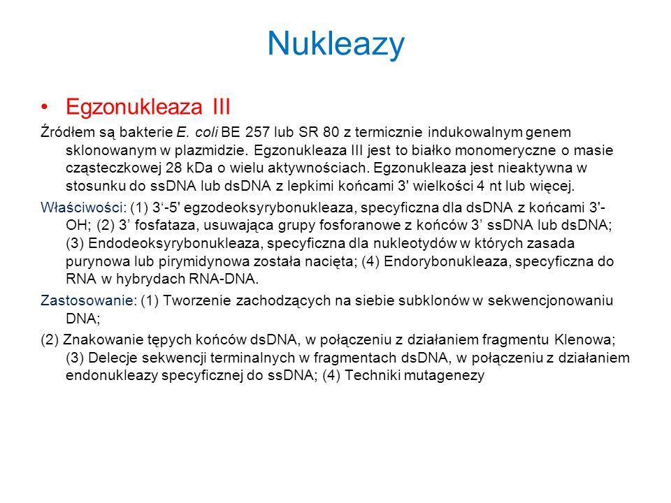 Nukleazy Egzonukleaza III