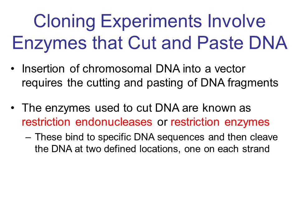 Cloning Experiments Involve Enzymes that Cut and Paste DNA