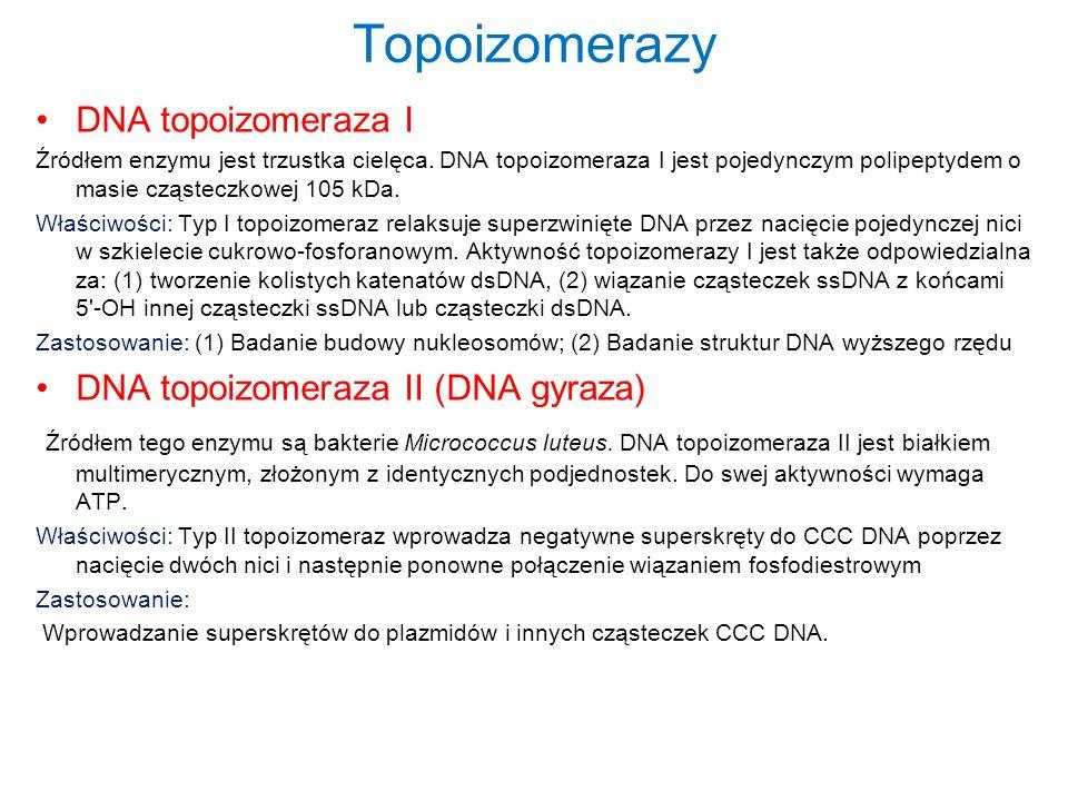 Topoizomerazy DNA topoizomeraza I DNA topoizomeraza II (DNA gyraza)
