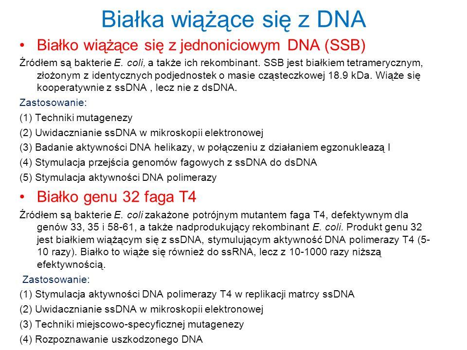 Białka wiążące się z DNA