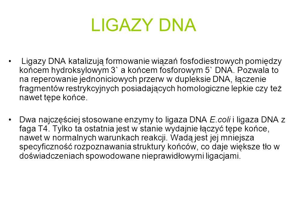LIGAZY DNA