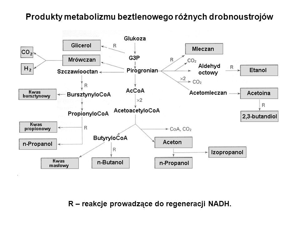 Produkty metabolizmu beztlenowego różnych drobnoustrojów
