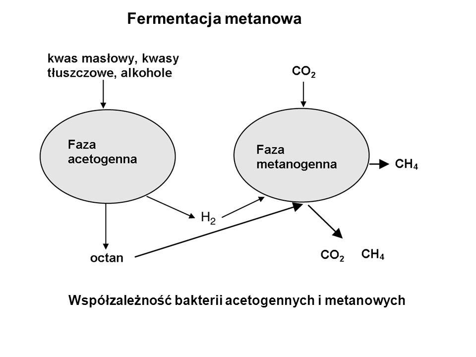 Fermentacja metanowa Współzależność bakterii acetogennych i metanowych