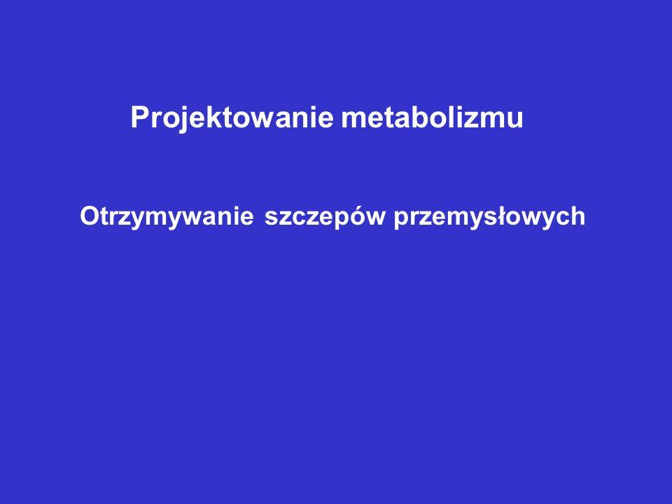 Projektowanie metabolizmu