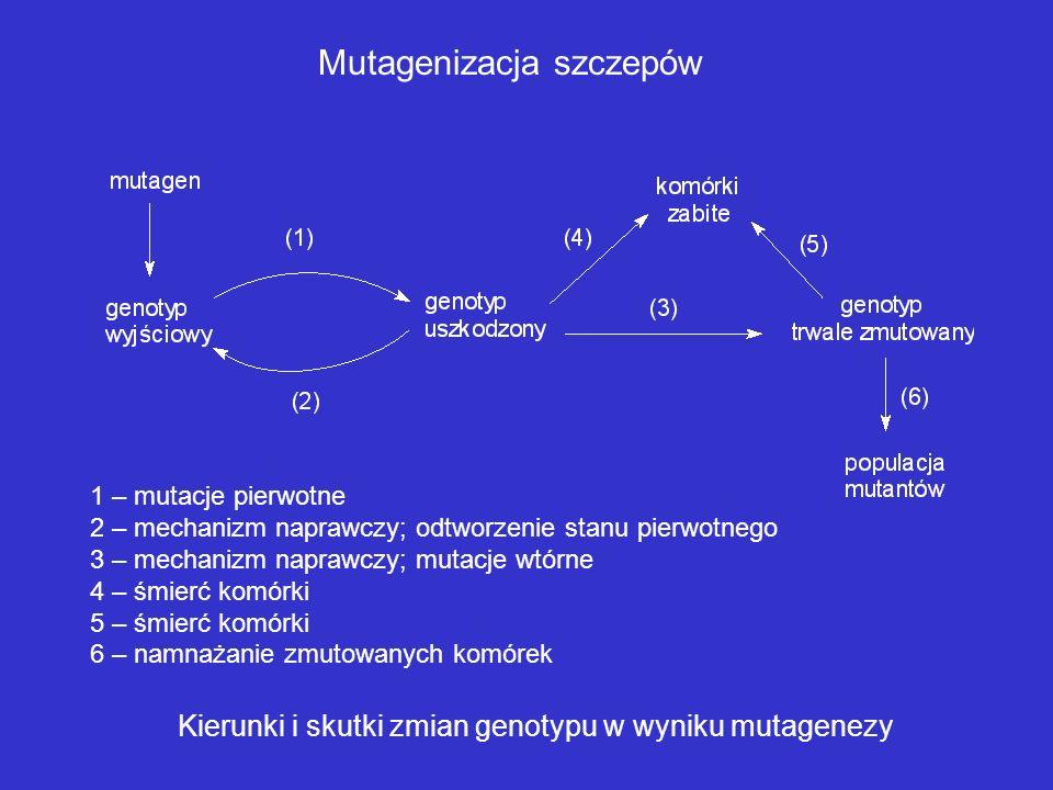 Mutagenizacja szczepów