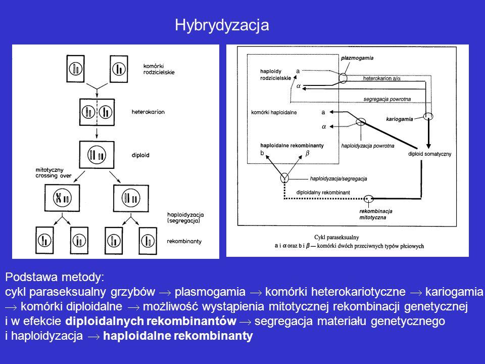 Hybrydyzacja Podstawa metody: