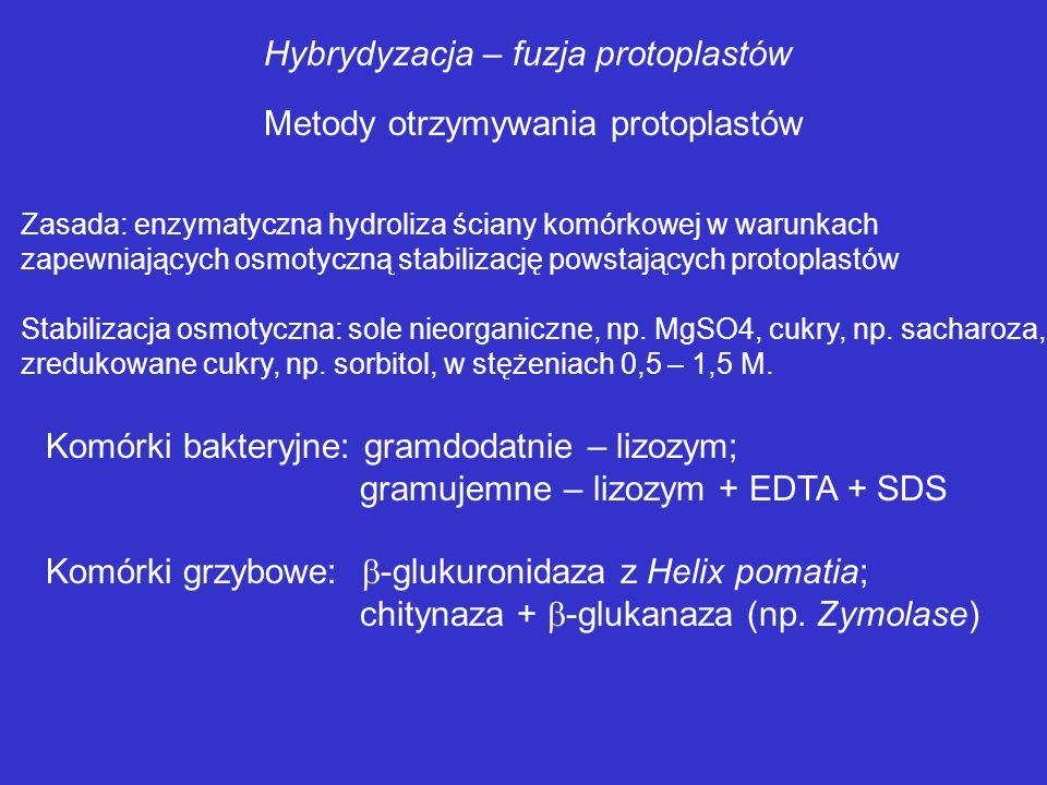 Hybrydyzacja – fuzja protoplastów