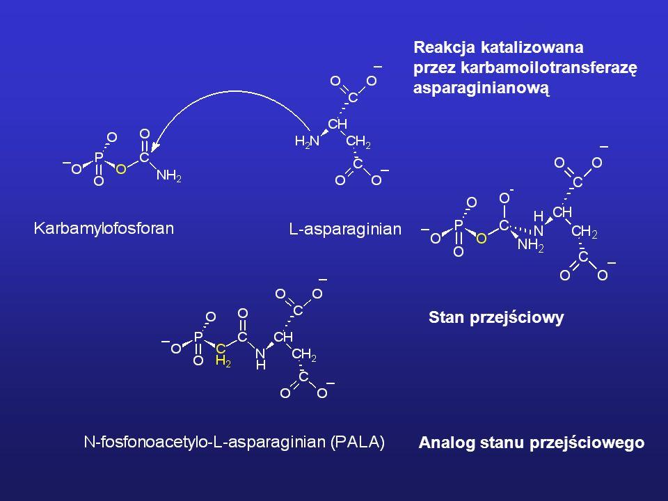 Reakcja katalizowana przez karbamoilotransferazę. asparaginianową.