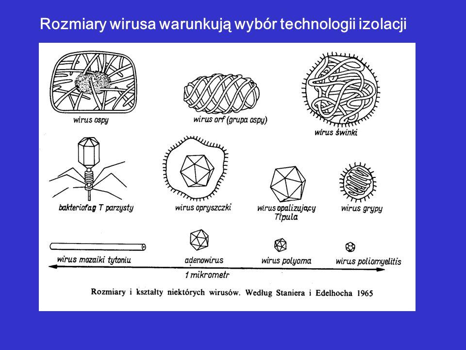 Rozmiary wirusa warunkują wybór technologii izolacji