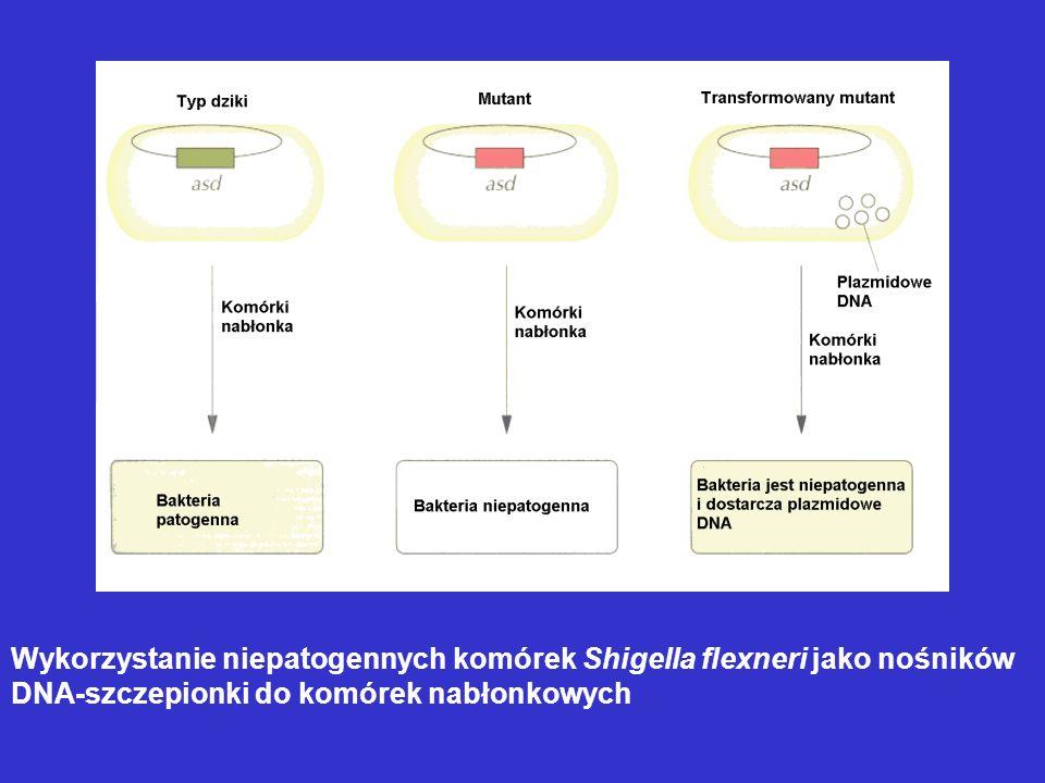 Wykorzystanie niepatogennych komórek Shigella flexneri jako nośników