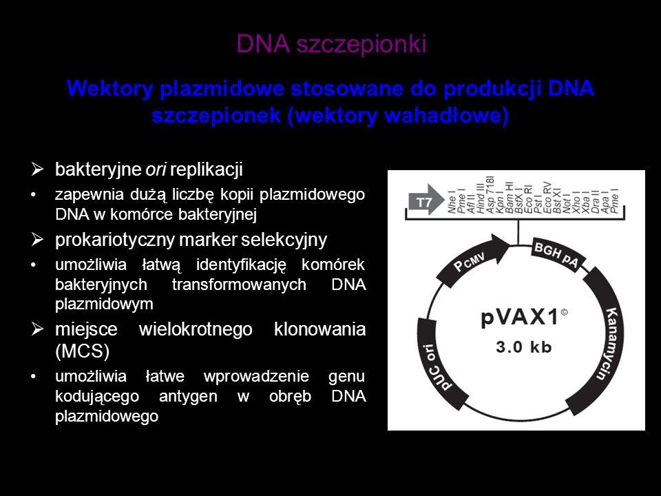 DNA szczepionki Wektory plazmidowe stosowane do produkcji DNA szczepionek (wektory wahadłowe) bakteryjne ori replikacji.