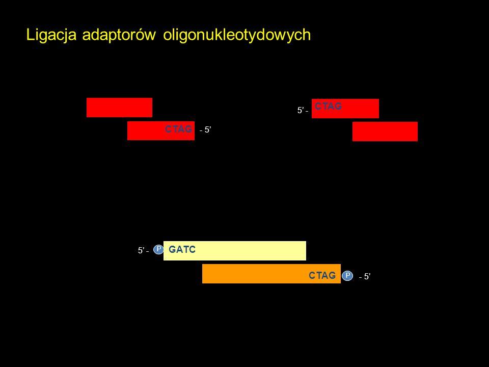 Ligacja adaptorów oligonukleotydowych
