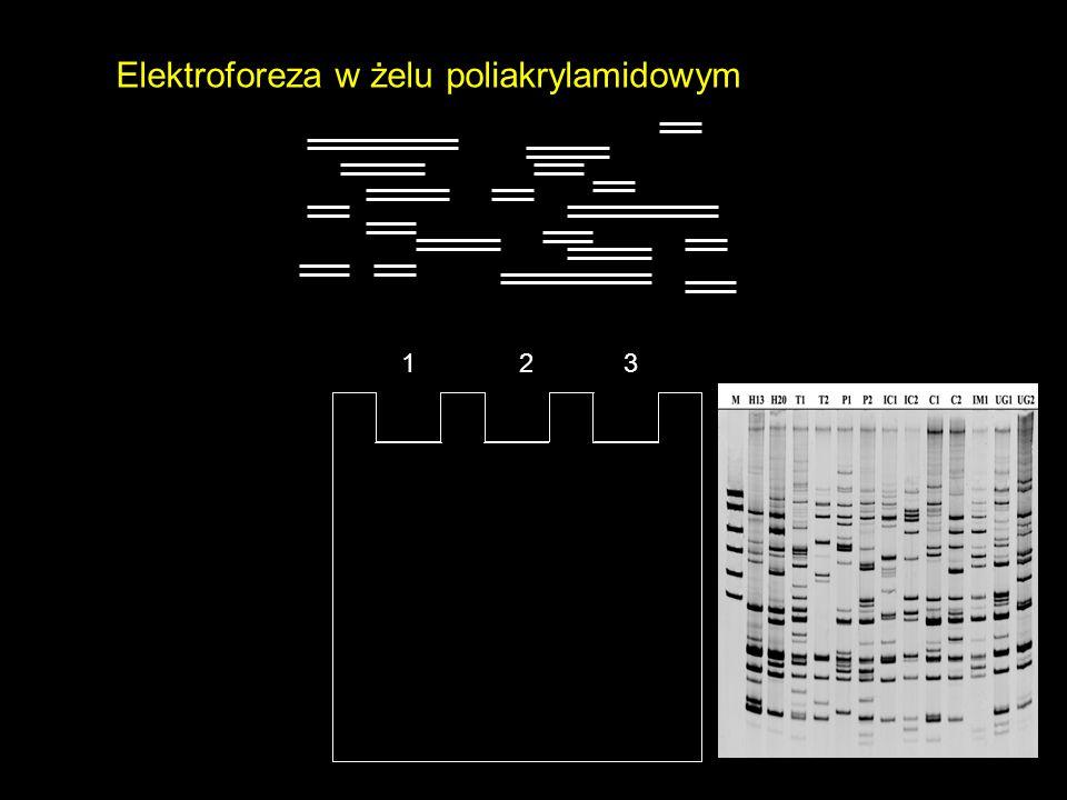 Elektroforeza w żelu poliakrylamidowym