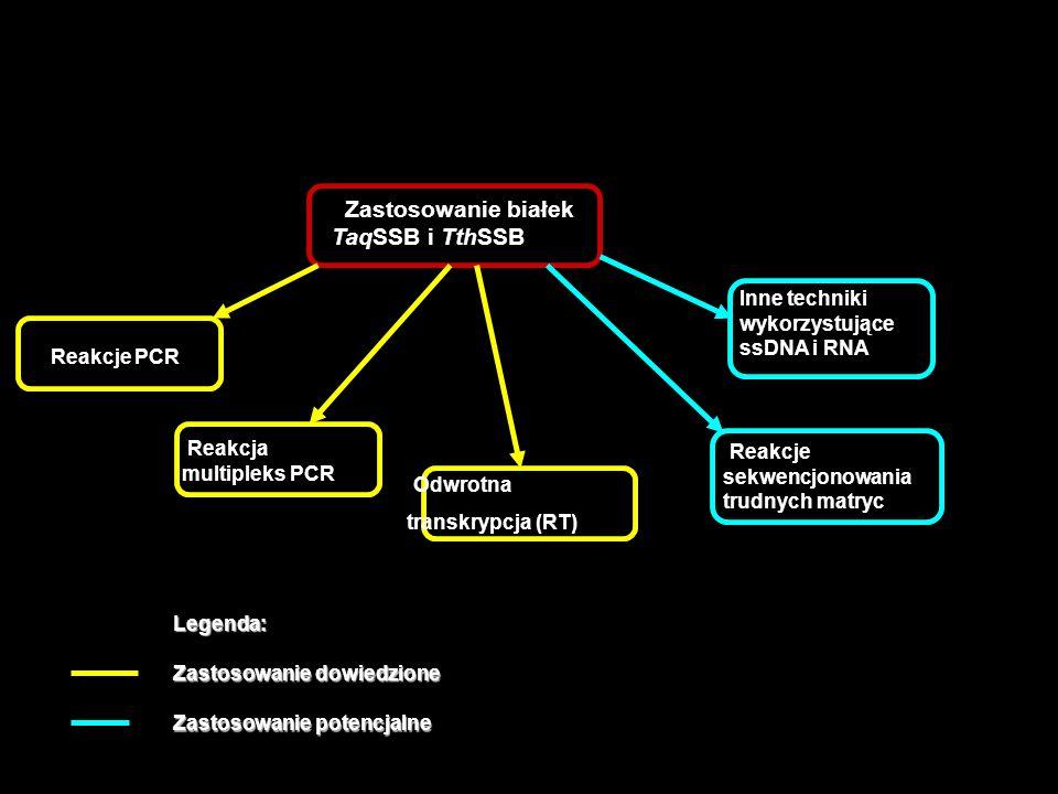 Aplikacje białek SSB Zastosowanie białek TaqSSB i TthSSB Reakcje PCR