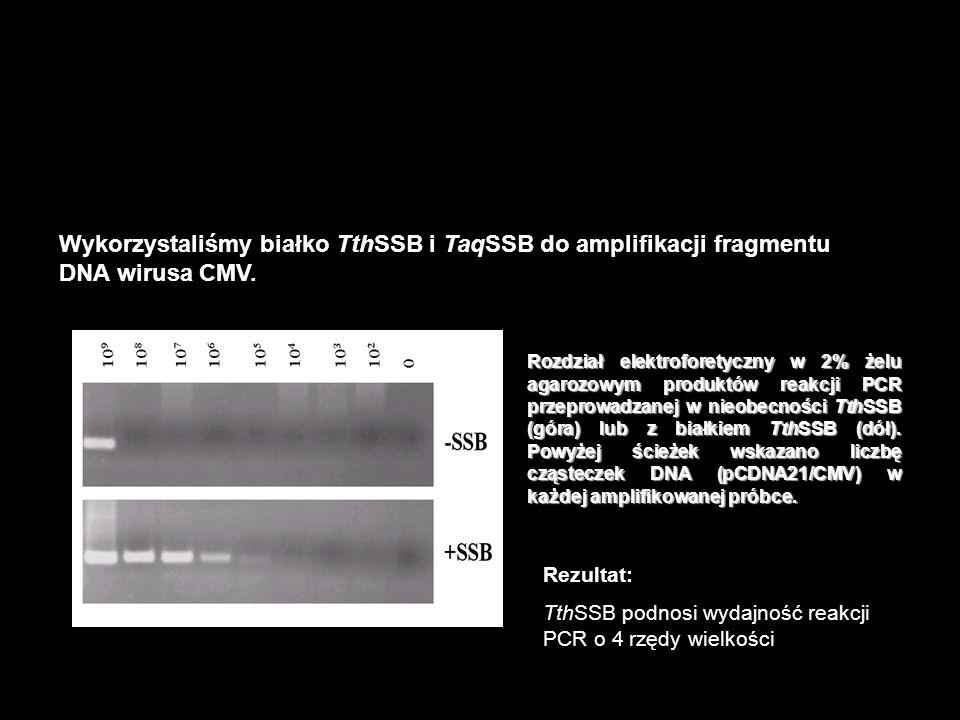 Reakcja PCR – jedną z najbardziej popularnych aplikacji termostabilnych białek SSB