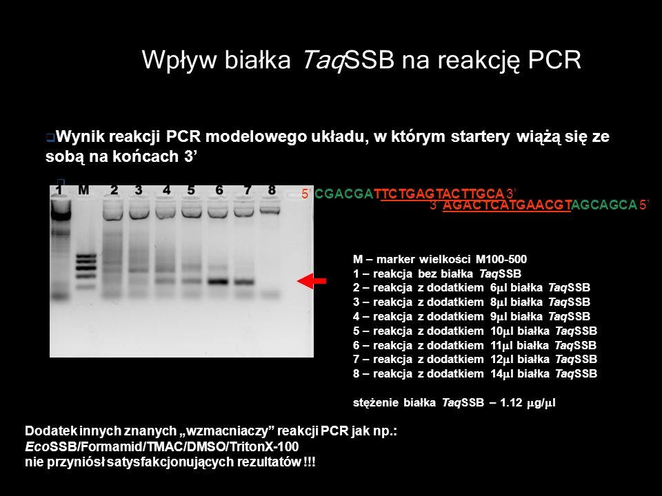Wpływ białka TaqSSB na reakcję PCR