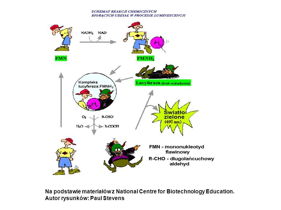 Na podstawie materiałów z National Centre for Biotechnology Education.