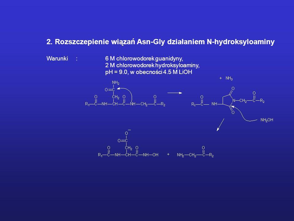 2. Rozszczepienie wiązań Asn-Gly działaniem N-hydroksyloaminy