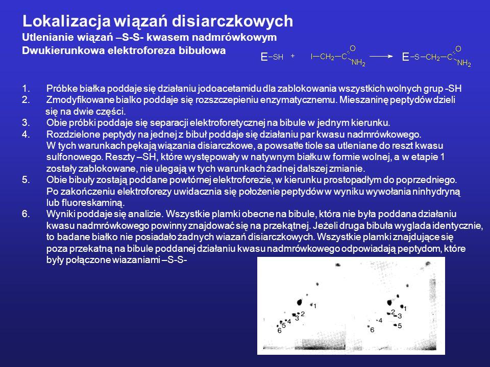 Lokalizacja wiązań disiarczkowych