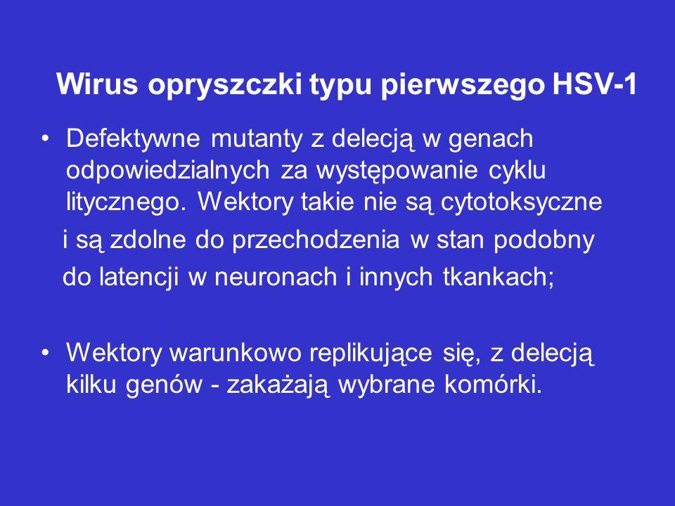 Wirus opryszczki typu pierwszego HSV-1