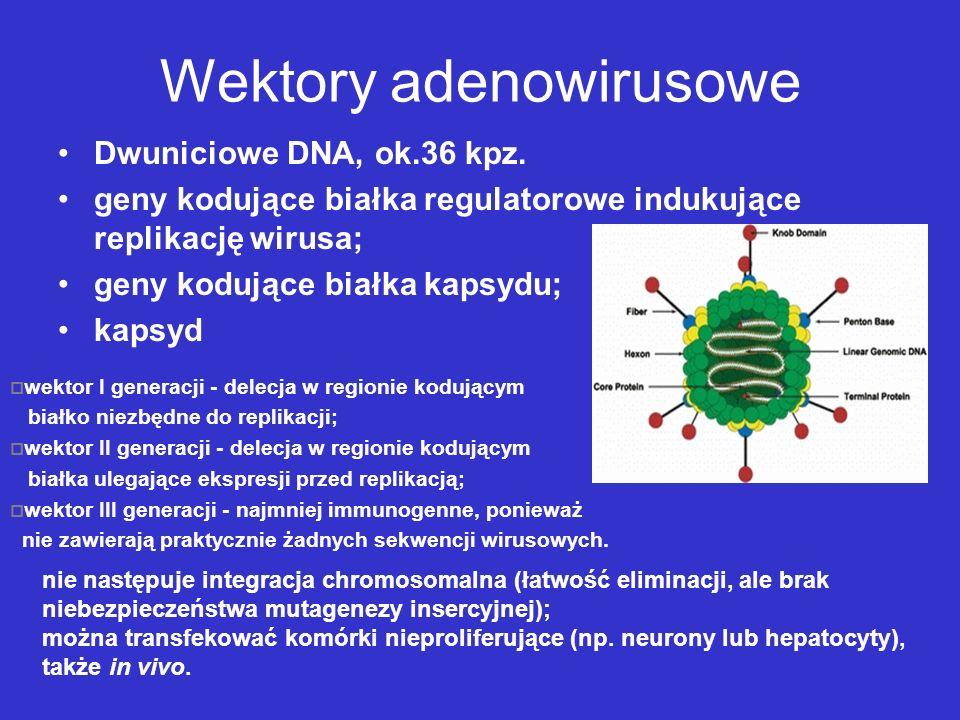 Wektory adenowirusowe