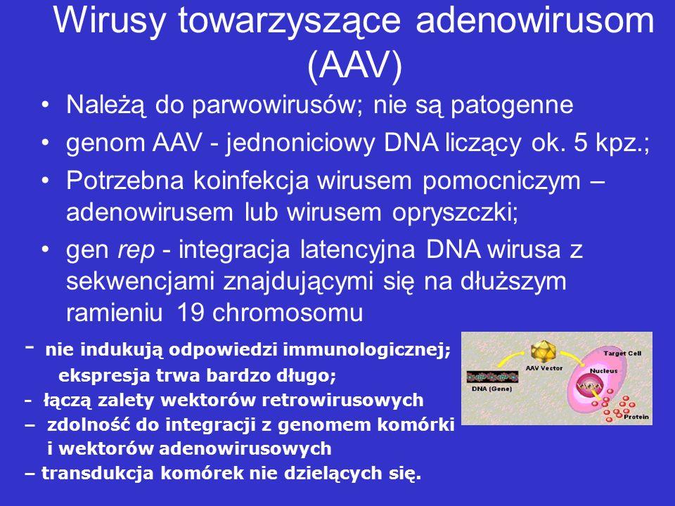 Wirusy towarzyszące adenowirusom (AAV)