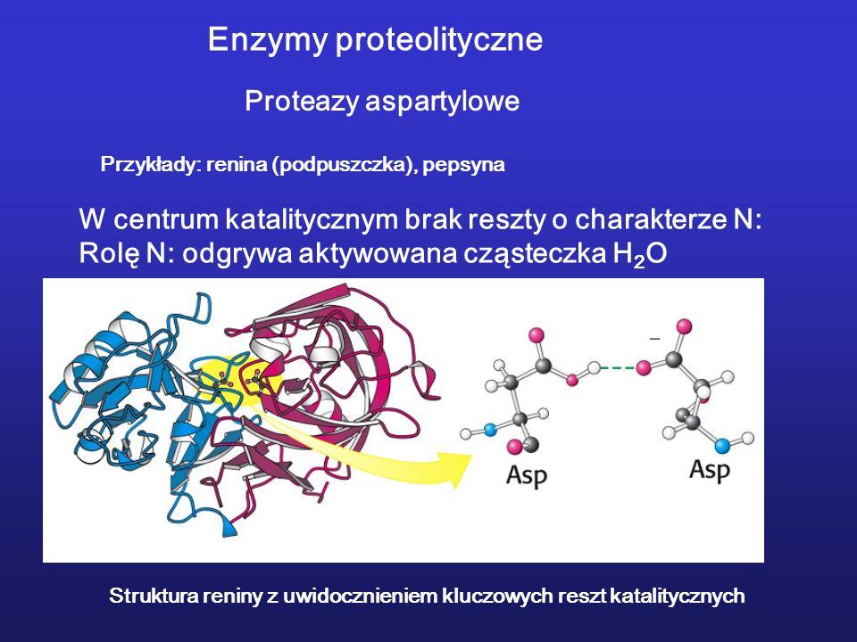 Enzymy proteolityczne
