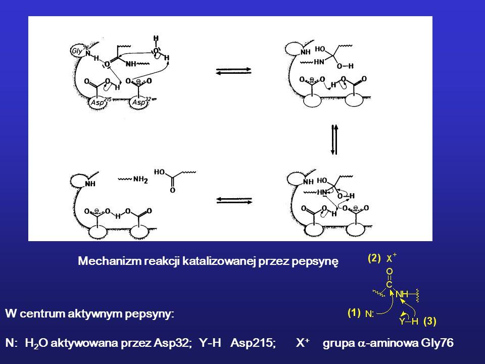 Mechanizm reakcji katalizowanej przez pepsynę