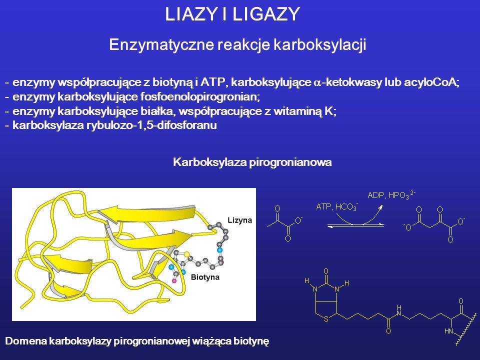 LIAZY I LIGAZY Enzymatyczne reakcje karboksylacji