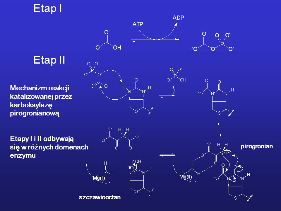 Etap I Etap II Mechanizm reakcji katalizowanej przez karboksylazę