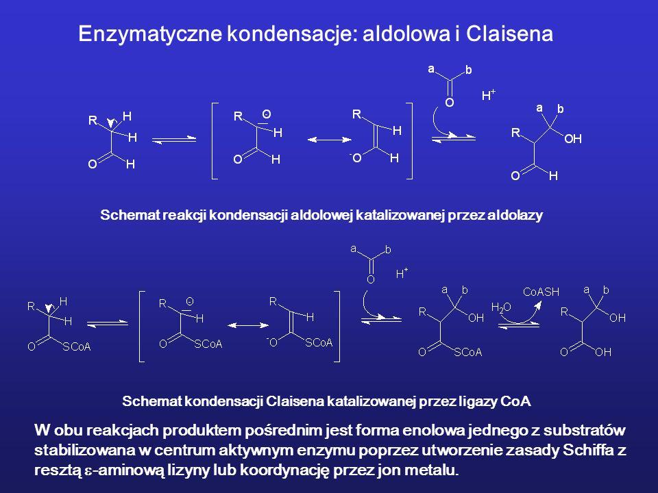 Enzymatyczne kondensacje: aldolowa i Claisena