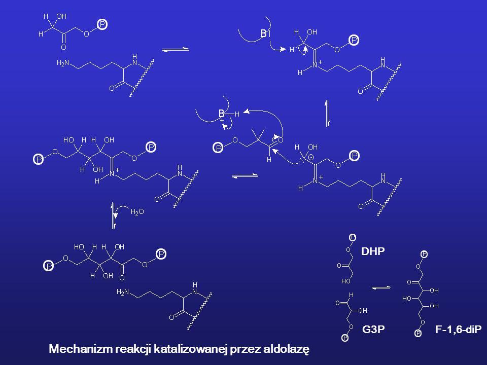 Mechanizm reakcji katalizowanej przez aldolazę