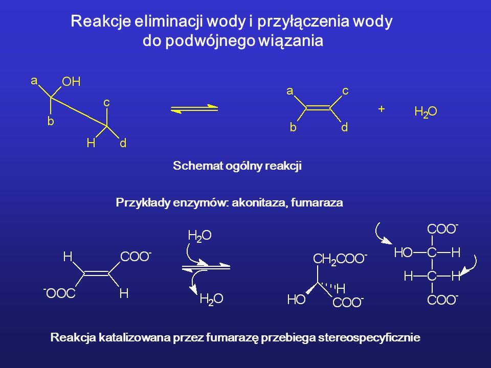 Reakcje eliminacji wody i przyłączenia wody do podwójnego wiązania