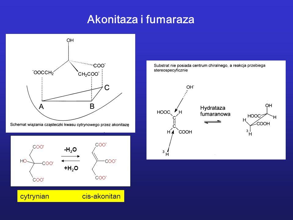 Akonitaza i fumaraza -H2O +H2O cytrynian cis-akonitan