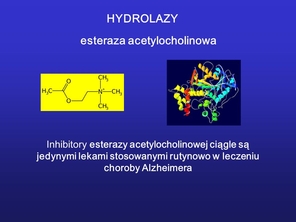 esteraza acetylocholinowa