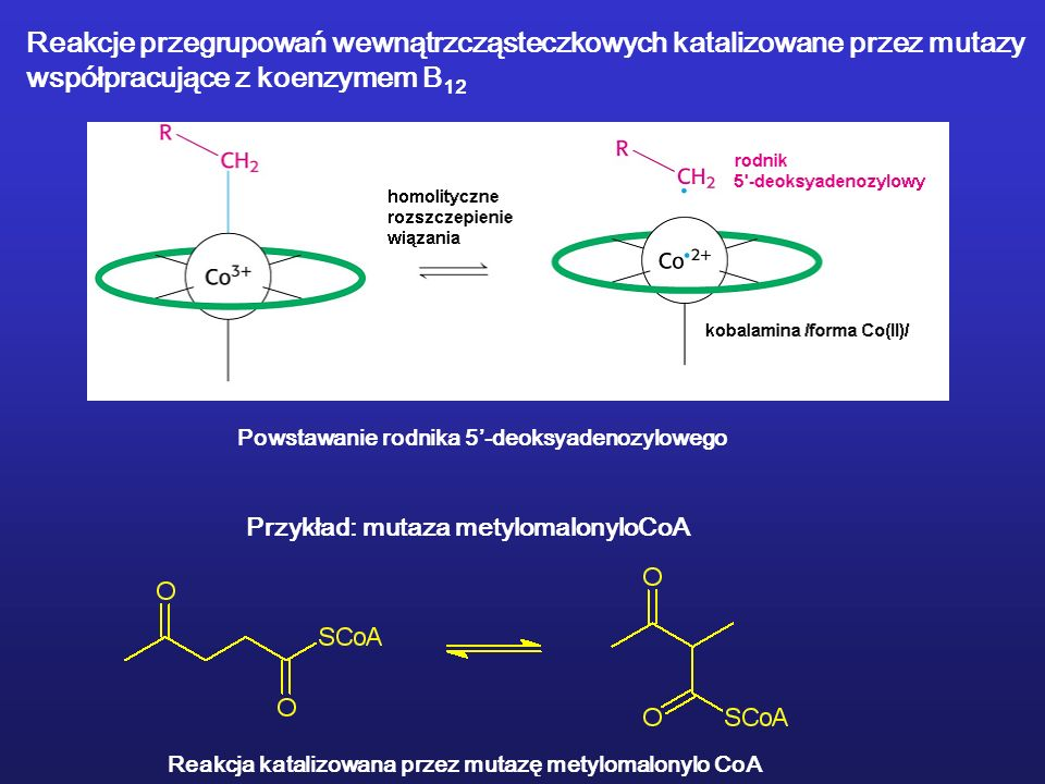 Reakcje przegrupowań wewnątrzcząsteczkowych katalizowane przez mutazy