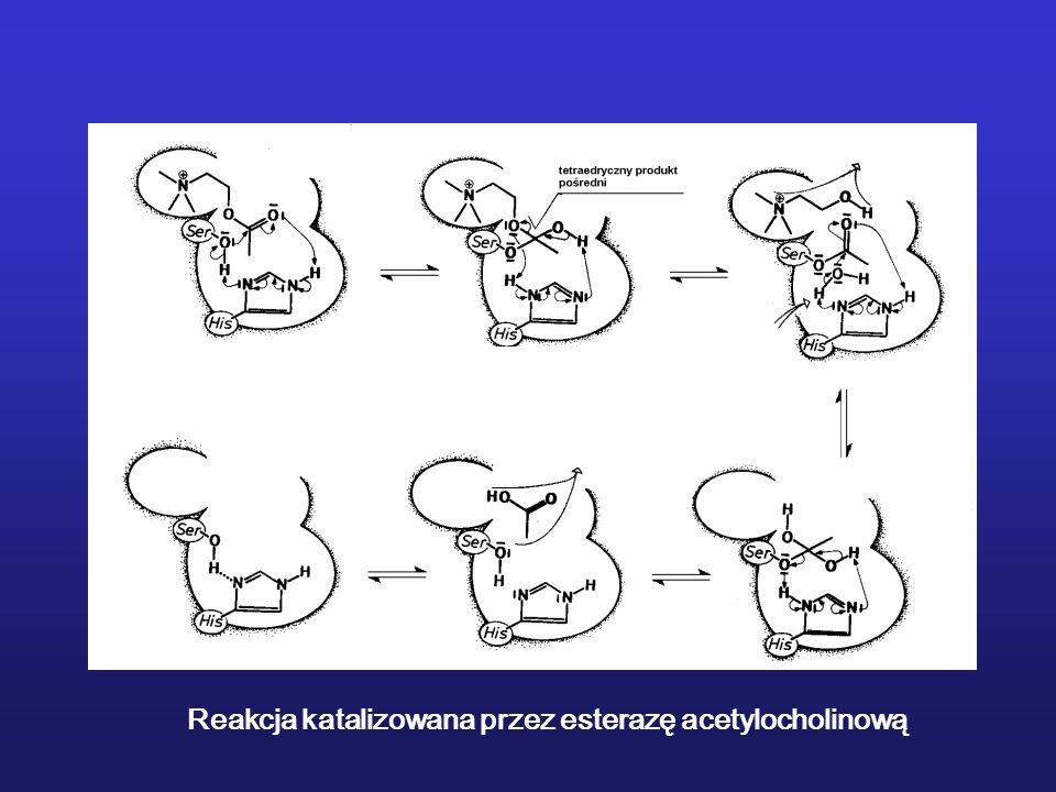 Reakcja katalizowana przez esterazę acetylocholinową