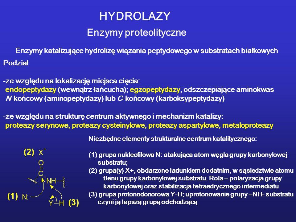 HYDROLAZY Enzymy proteolityczne