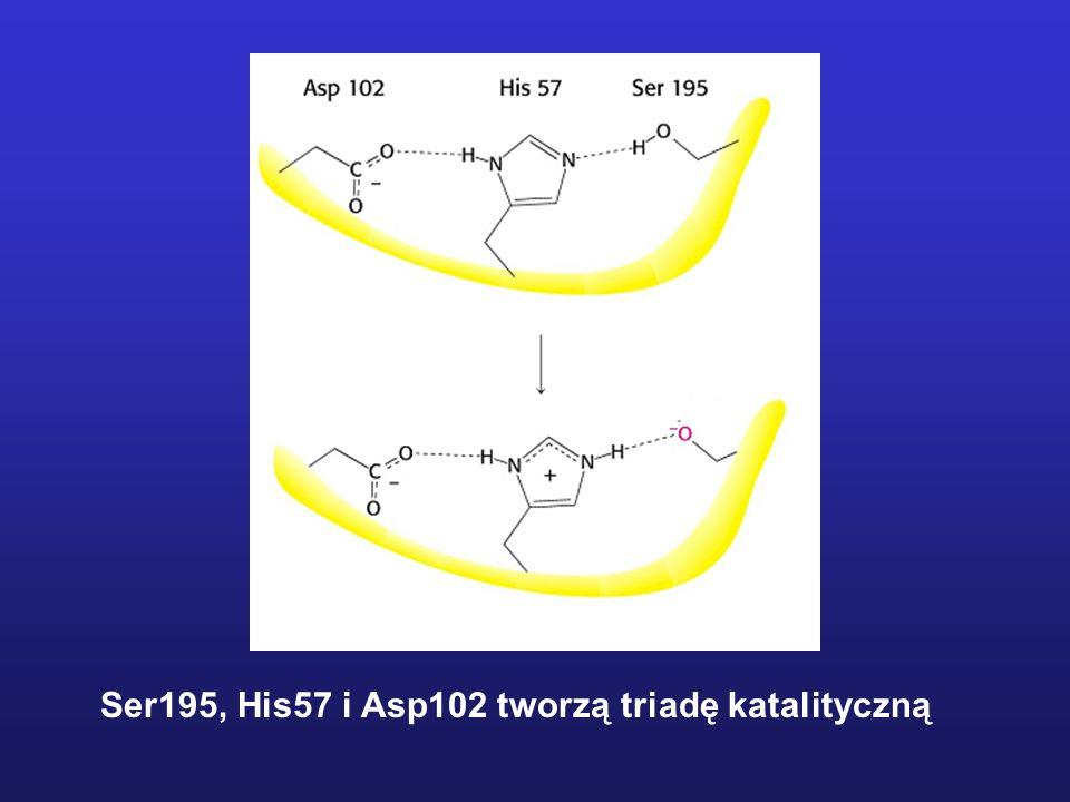 Ser195, His57 i Asp102 tworzą triadę katalityczną