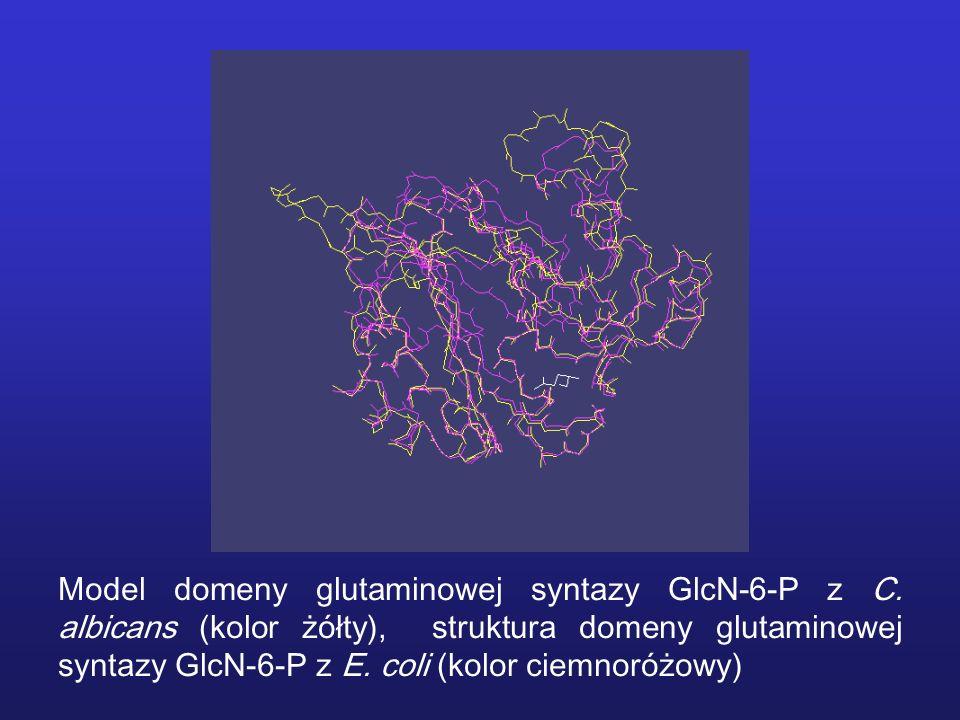 Model domeny glutaminowej syntazy GlcN-6-P z C